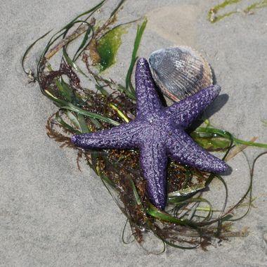 Starfish & Company May 15, 2014 Parksville Park beach