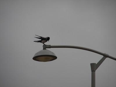 Gray Day Landing