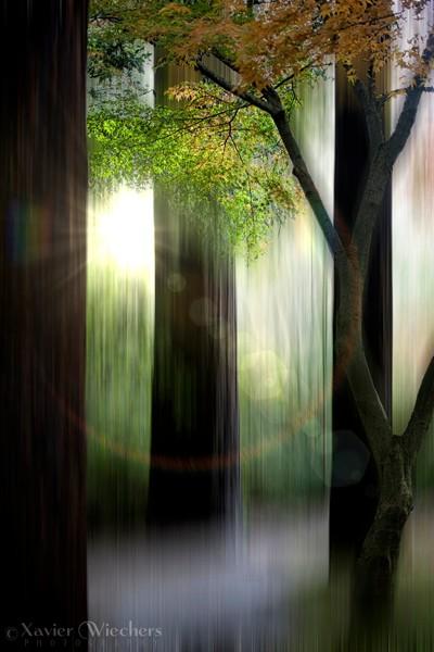 Fine Art Forest-WM
