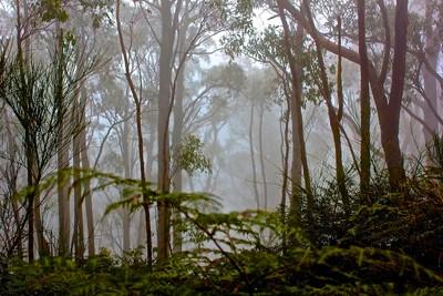Mt Lofty walk