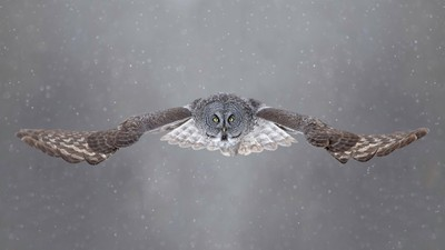 A Beautiful Collection Of Animal Shots: Photo Contest  Finalists