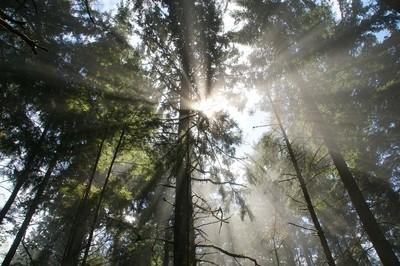 Streaking through the trees