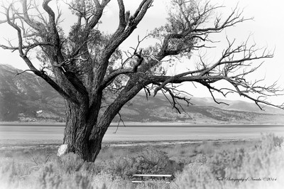 Dry Lake; Dry Tree