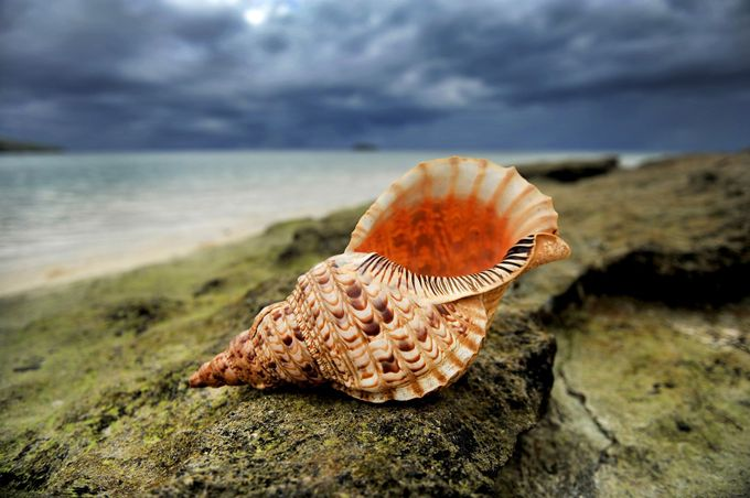 4532_OCEAN BEAUTY by photoshooter - Subjects On The Ground Photo Contest