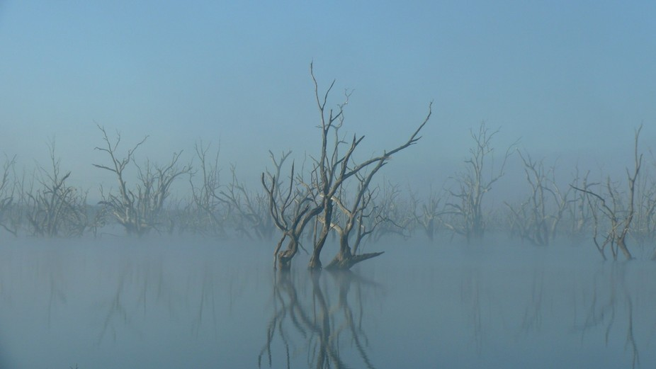 Dead tree rising out in mist