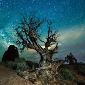 I took this night image in Arches National Park, Utah.  This is a single 30 second exposure.  I light painted the tree as I was taking the picture.