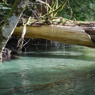 crystal clear creek in Cathedral Grove on Vancouver Island runs into Cameron Lake - 9 May 2010