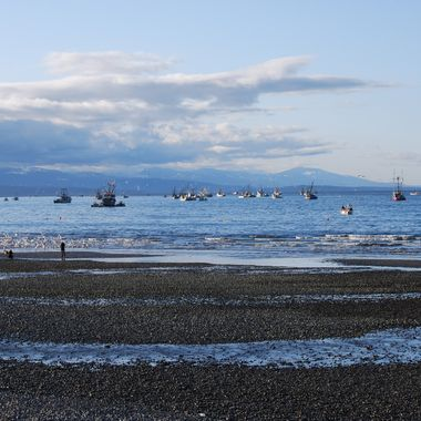 Fishing Frenzy in Early March 2013 - It's Herring Season ... this is taken in Qualicum Beach on Vancouver Island