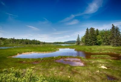 Colorful Wetlands