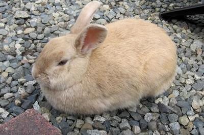 Caught this rabbit having a nap.