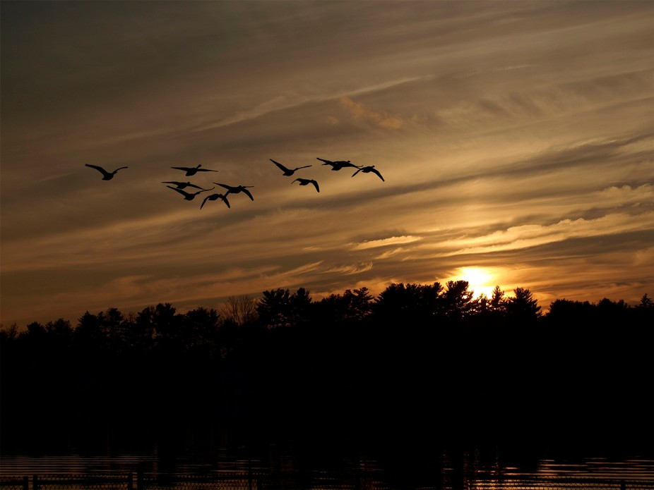 While capturing a magnificent sunset, I was presented with a flock of Canadian Geese which create...