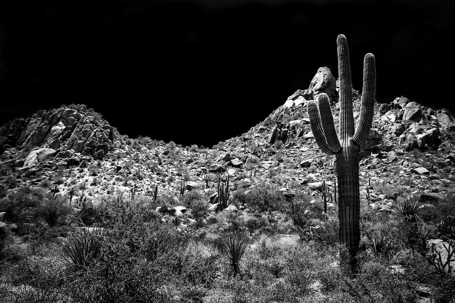 Desert in black & white