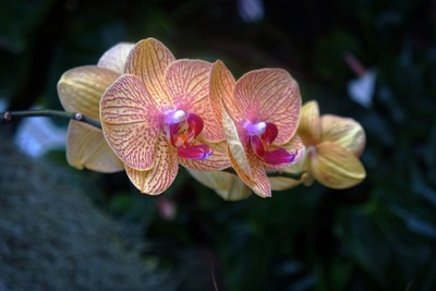 Orchid 2