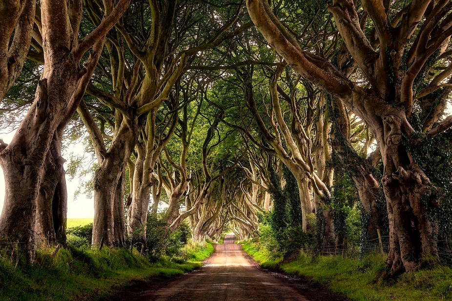 The Dark Hedges is a unique stretch of the Bregagh Road near Armoy, in Northern Ireland, that loo...