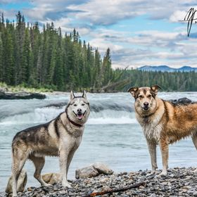 My dogs posing for a photo by the water