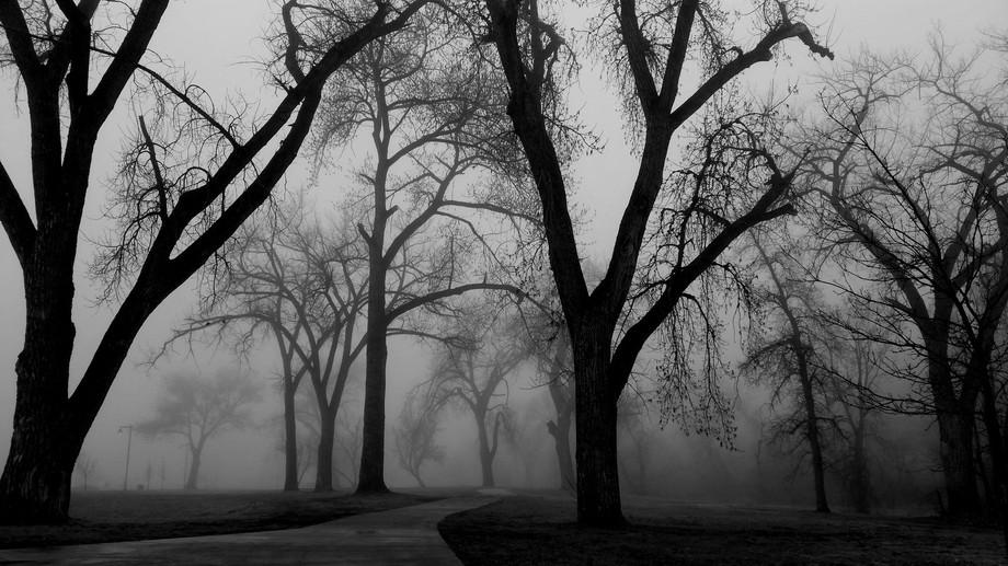 Heavy fog early morning in South Dakota