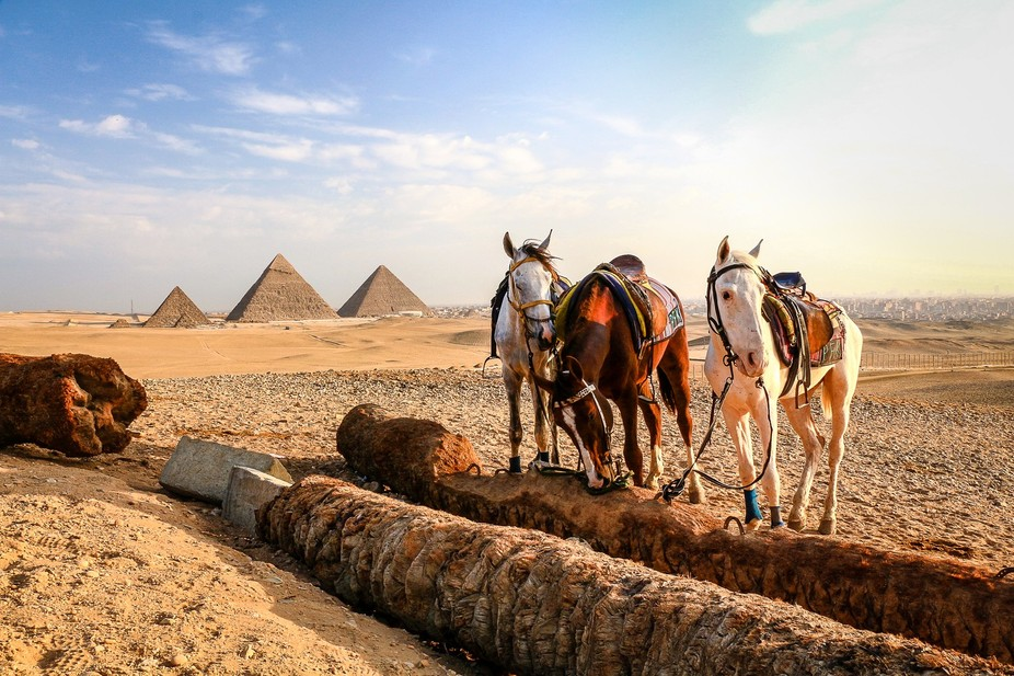 Early morning. Three horses by the three Great Pyramids of Giza, Egypt.