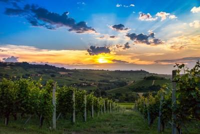 Sunset on vineyards