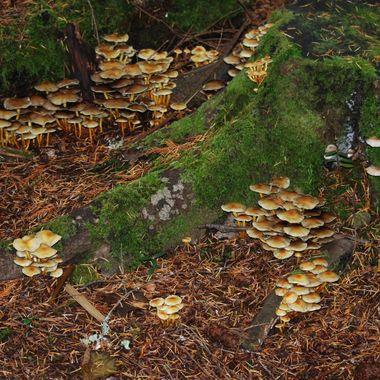 DSC_0115  Fall in Parksville, B.C. near tracks behind Springwood Park 2013