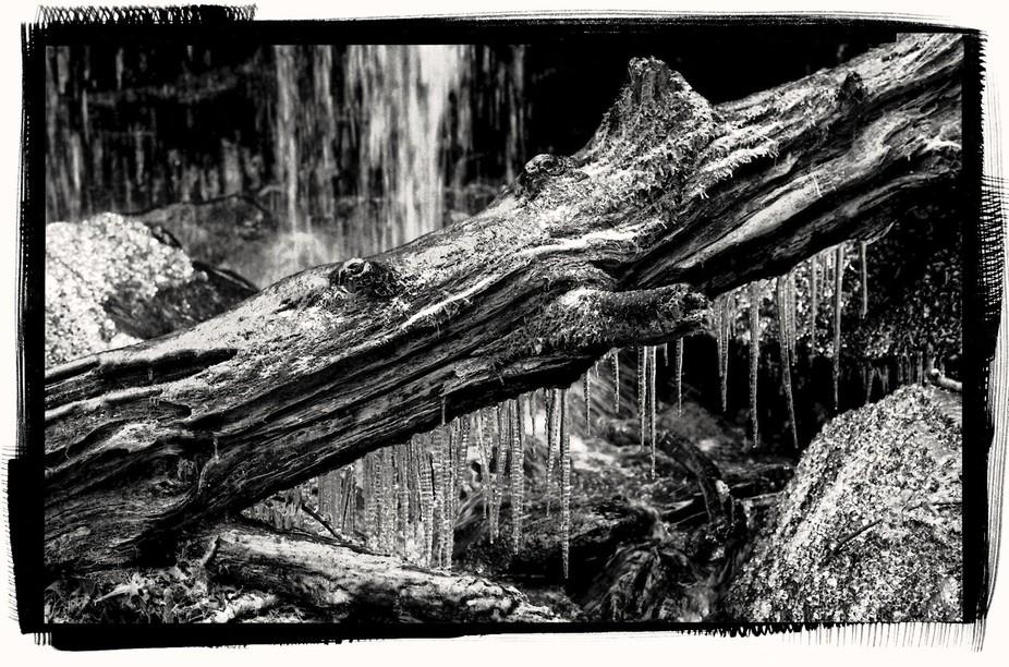 Ice Log Gatlinburg