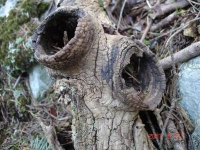 Two door nest