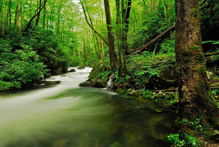 Picture taken in Great Smoky Mountains National Park.