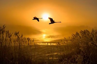 Flight of the Swans