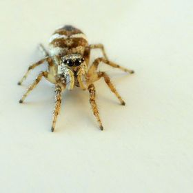 This spider sat on the door of my white van, two shots were enough! She is so cute...