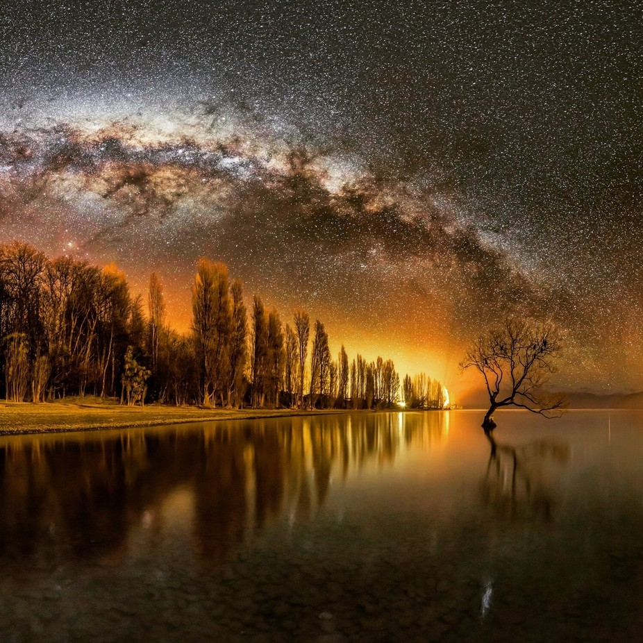 Wanaka Way - cropped by Mike_MacKinven - Silhouettes Of Trees Photo Contest