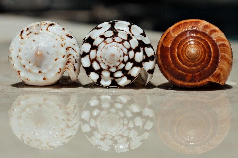 Shells with a play on reflection