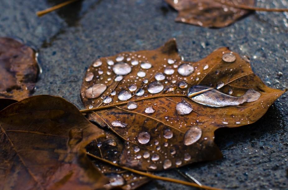 Colour of Fall