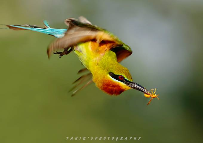 The Jet by tahirabbasawan - Image of the Year Photo Contest by Snapfish