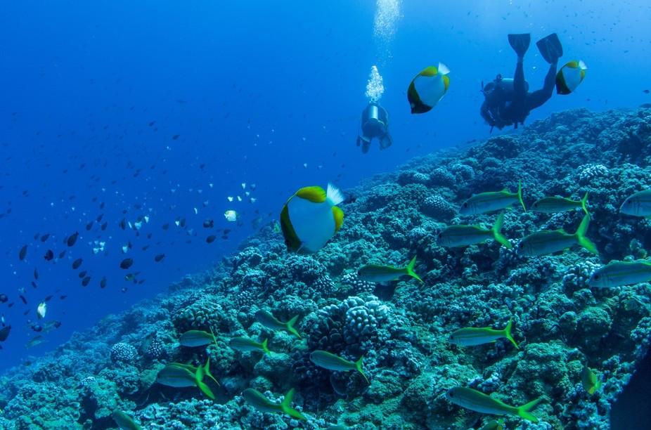 Scuba in Maui