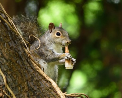 Tree rat's lunch time... :)