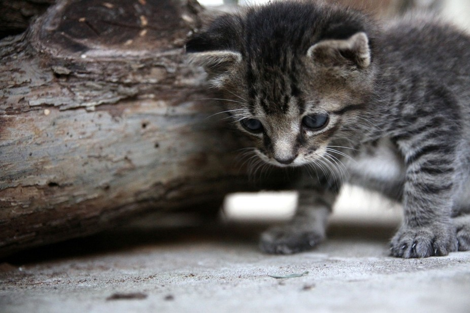 This kitten is out for his first time outside, what many things he found interesting