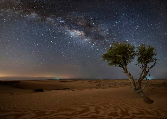 the Gate Keeper by SamyOlabi - A Lonely Tree Photo Contest