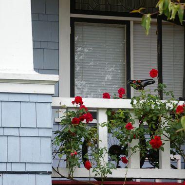Roses & Bike on Porch in Nanaimo