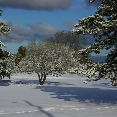 This is Qualicum Beach`s Memorial Golf Course during one winter :)