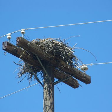 Eagle nest on the power pole between the power lines around Williams Lake, BC