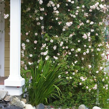 A charming garden at the Chamber of Commerce in Qualicum Beach