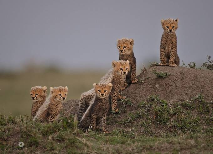 The Mara Six by AndyHowePhotography - My Best Shot Photo Contest Vol 3