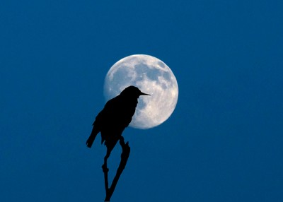 Against the Full Moon