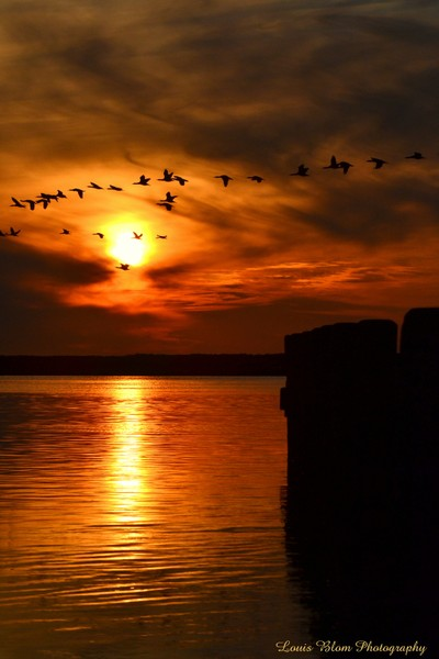 Sunset with birds2