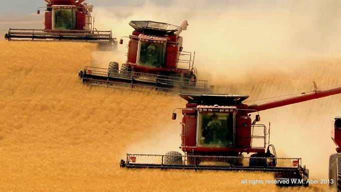 bodeau three combines by wmabel - Farming Photo Contest
