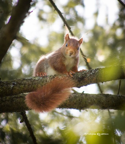 Squirrel on the spot