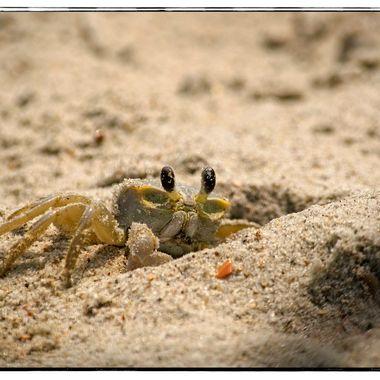 Big Crab 2 Border