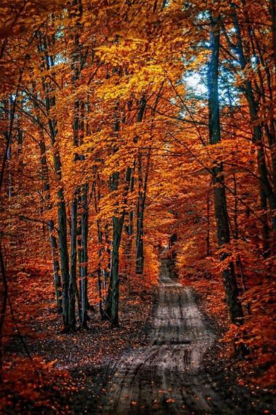 The Fall too