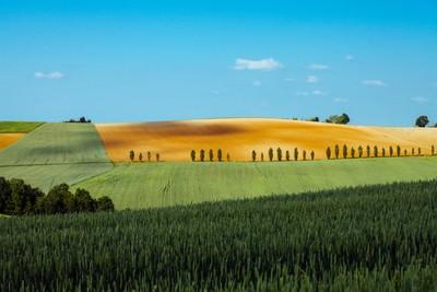 Rural Geometries