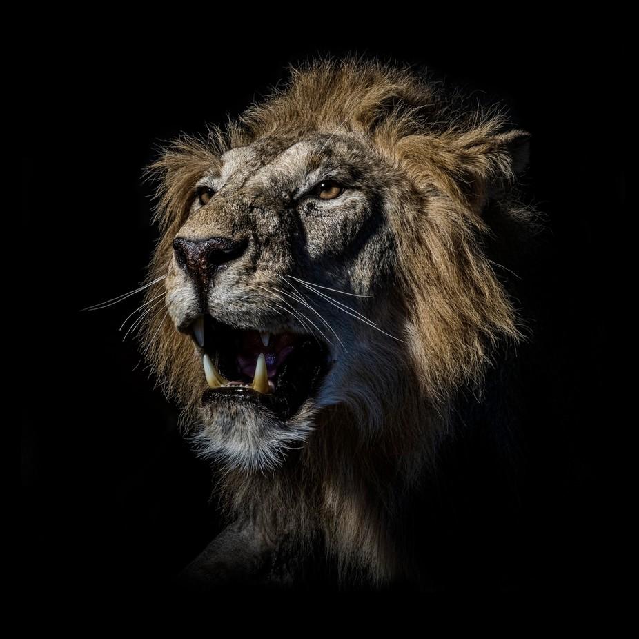 Alpha Males: Photo Contest Winners
