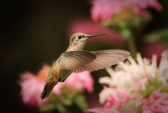 Hummingbird by isstoossay - Depth In Nature Photo Contest